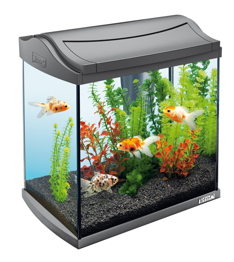 fish tank Here's how to clean a dirty aquarium the right way, the tools you'll need and the practices to avoid.